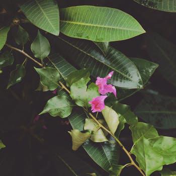 热带浩室 - TropicalHouse