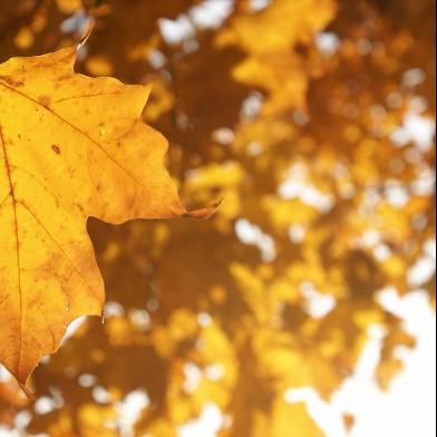 秋天的落叶