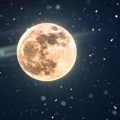 月夜雪影摇