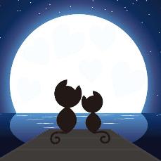 温柔的月光